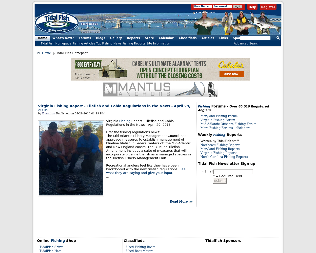Tidal-Fish-Advertising-Reviews-Pricing