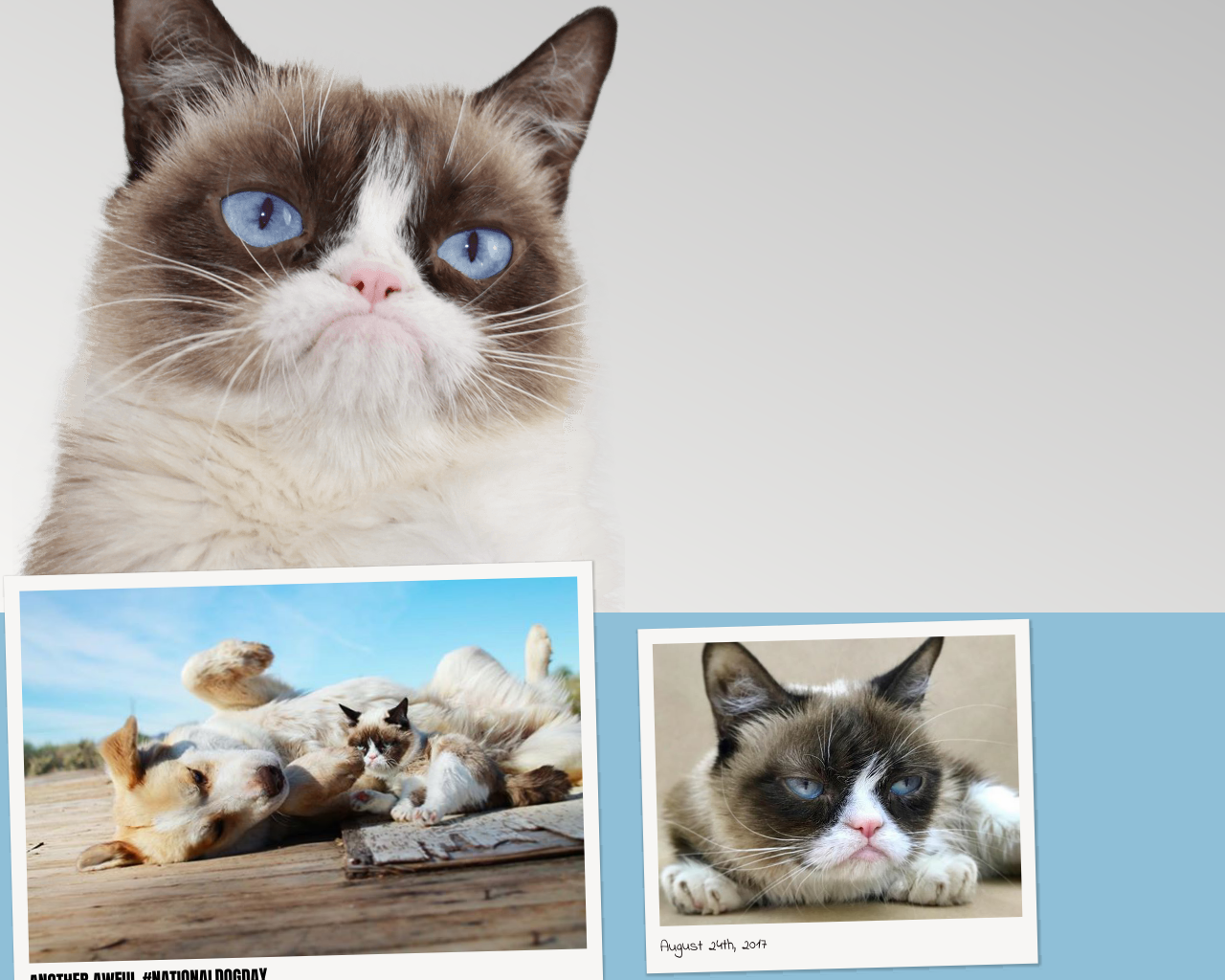 Grumpy-Cat-Advertising-Reviews-Pricing