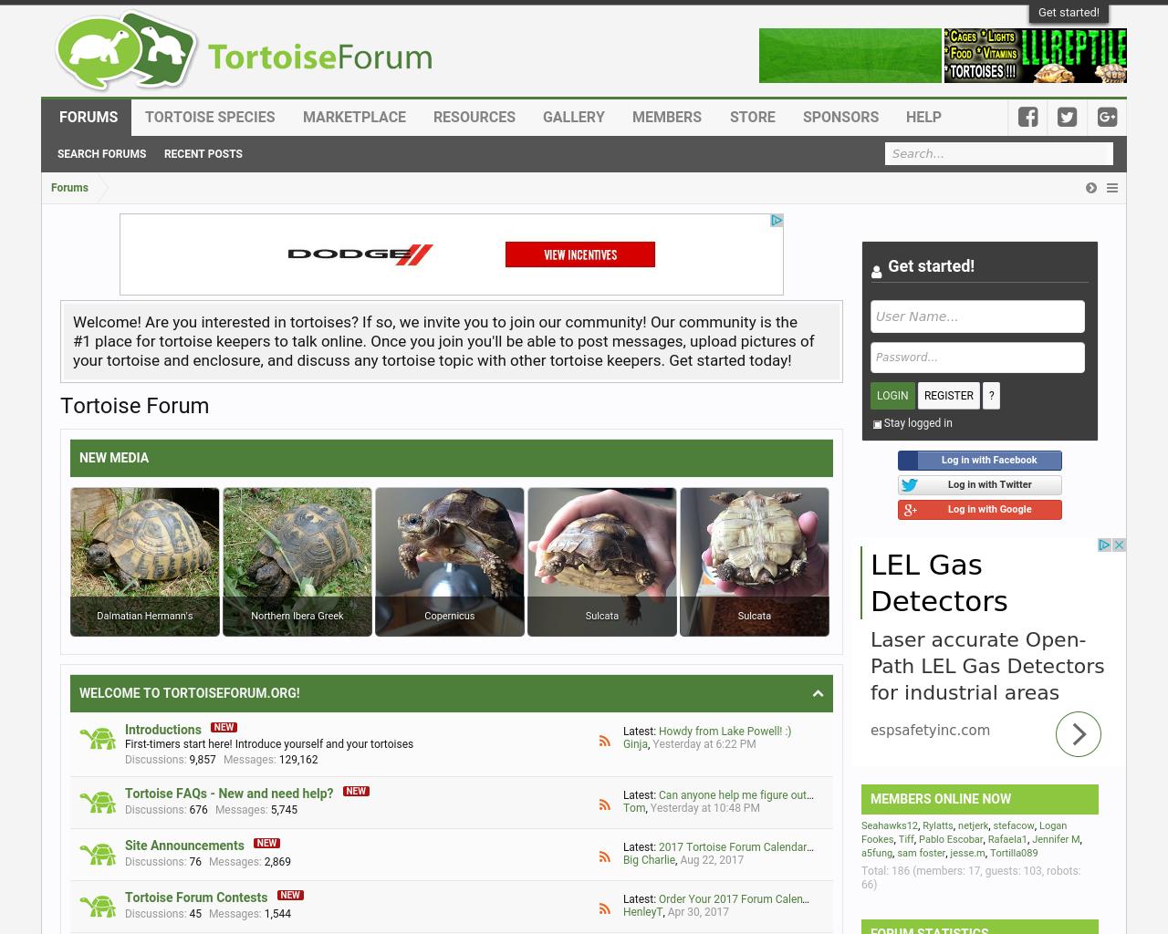Tortoise-Forum-Advertising-Reviews-Pricing