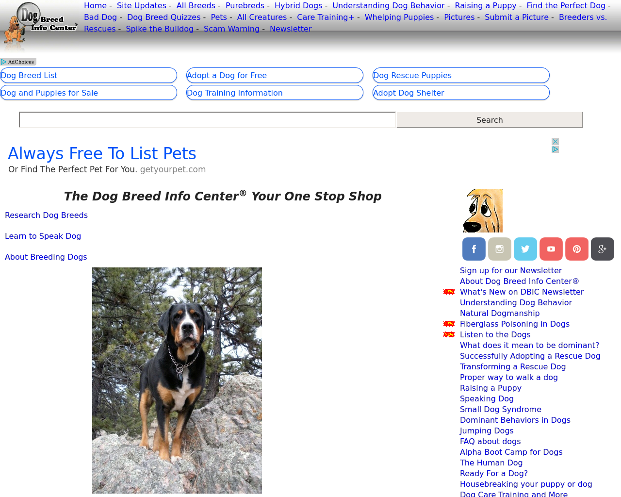 Dog-Breed-Info-Advertising-Reviews-Pricing