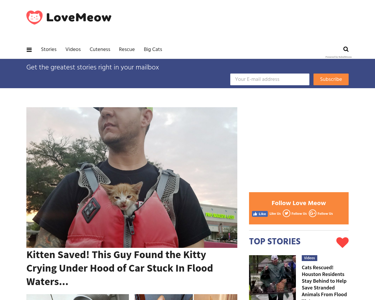 Love-Meow-Advertising-Reviews-Pricing