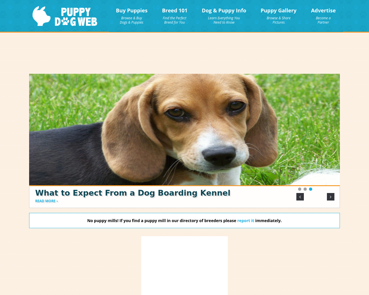 PUPPY-DOG-WEB-Advertising-Reviews-Pricing