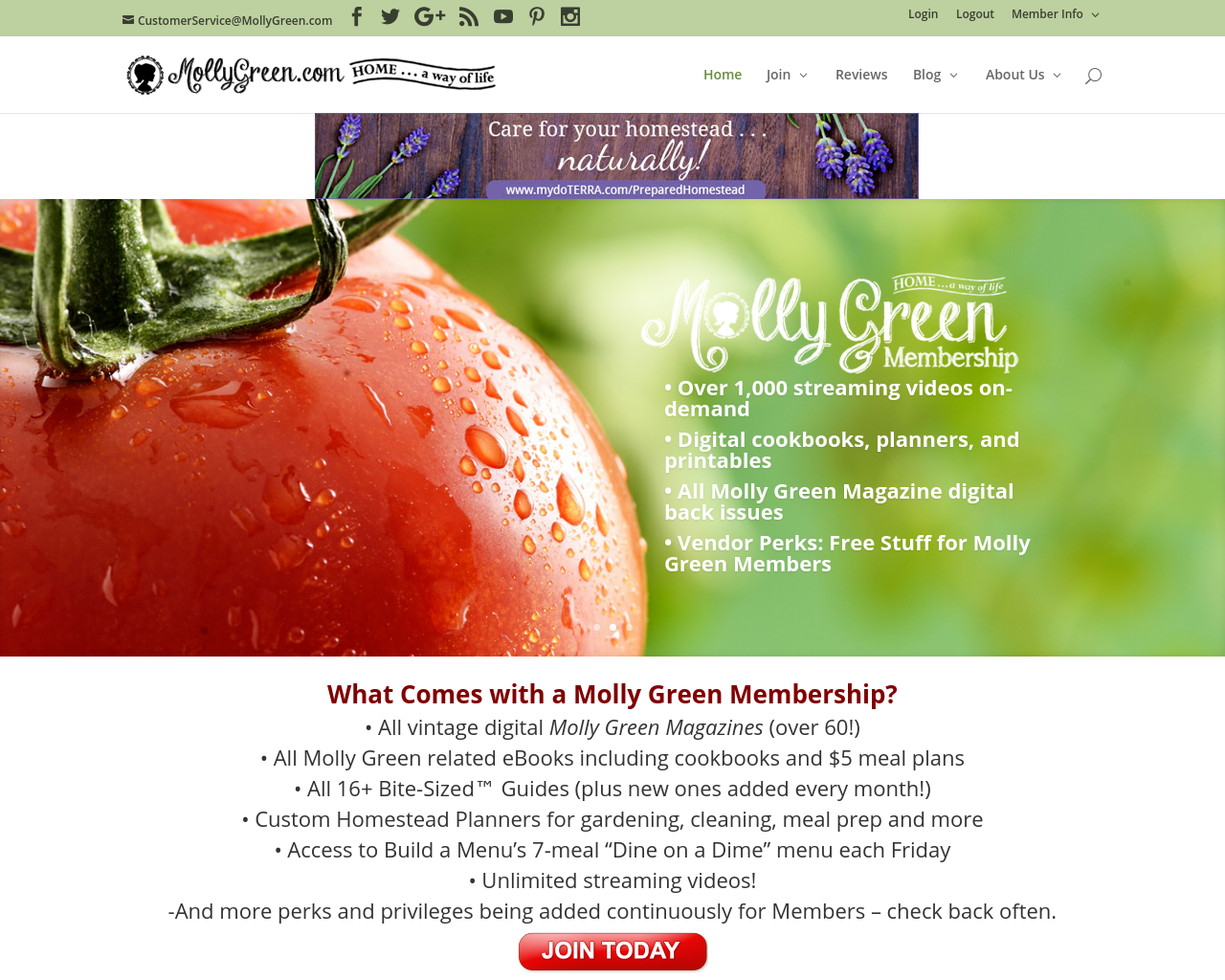 Molly-Green-Advertising-Reviews-Pricing