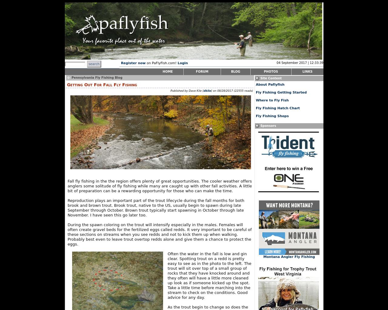 Paflyfish-Advertising-Reviews-Pricing