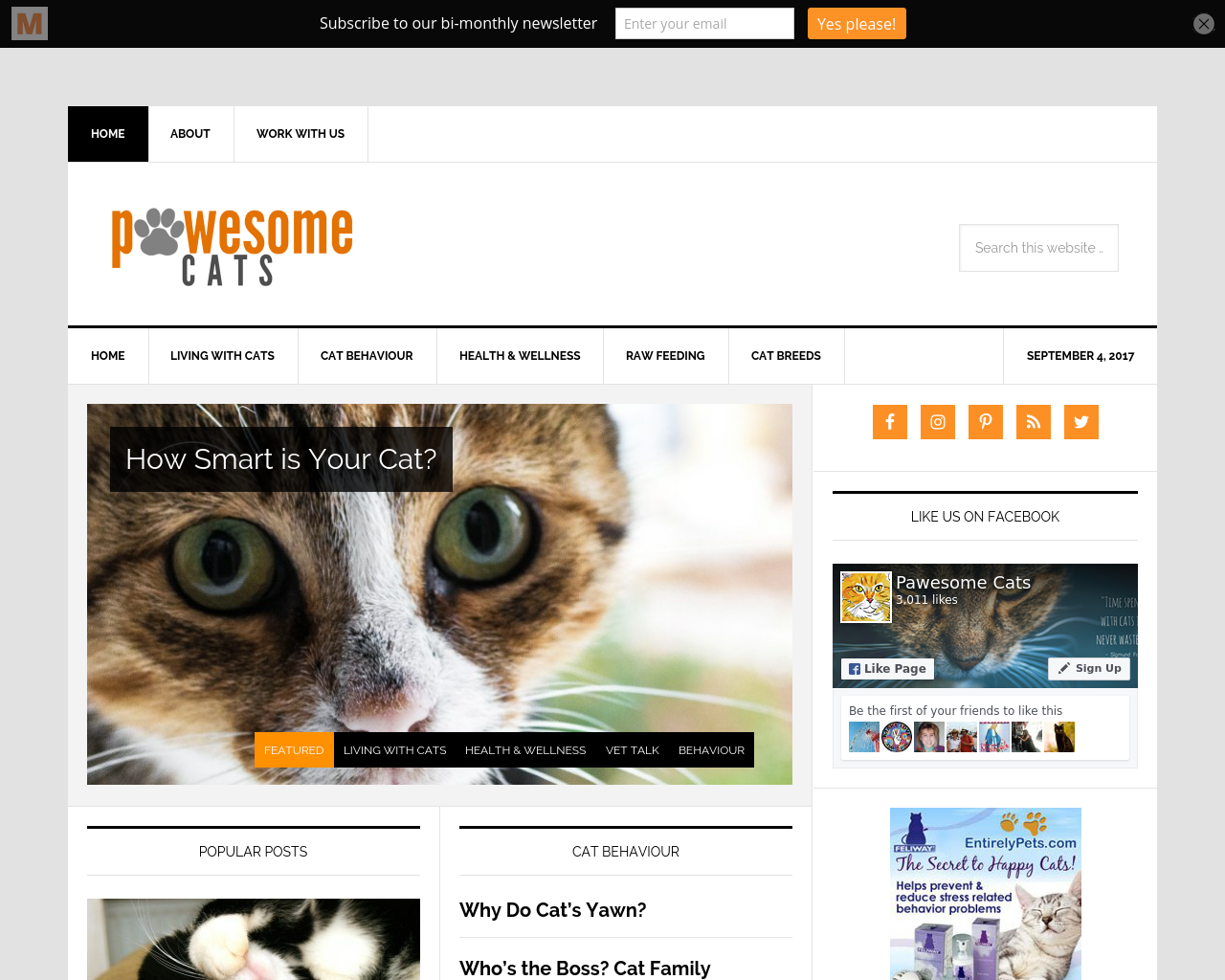 Pawesome-Cats-Advertising-Reviews-Pricing