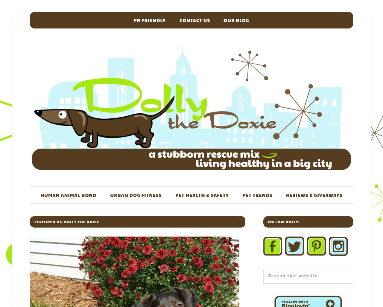 Dolly-The-Doxie-Advertising-Reviews-Pricing
