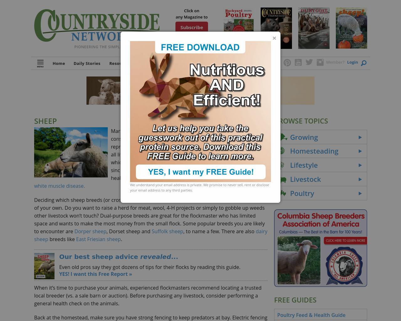Sheep-Magazine-Advertising-Reviews-Pricing