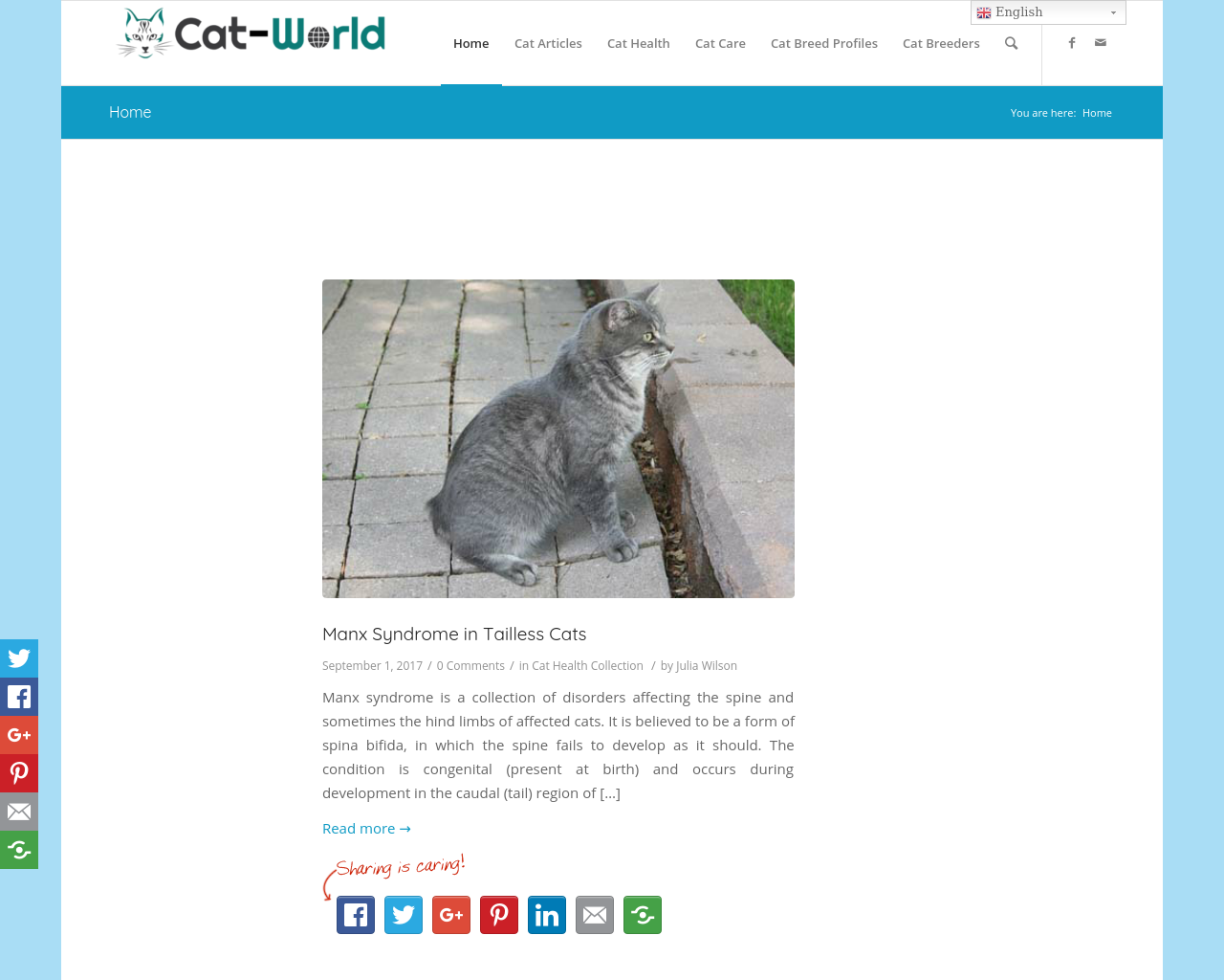 Cat-World-Advertising-Reviews-Pricing