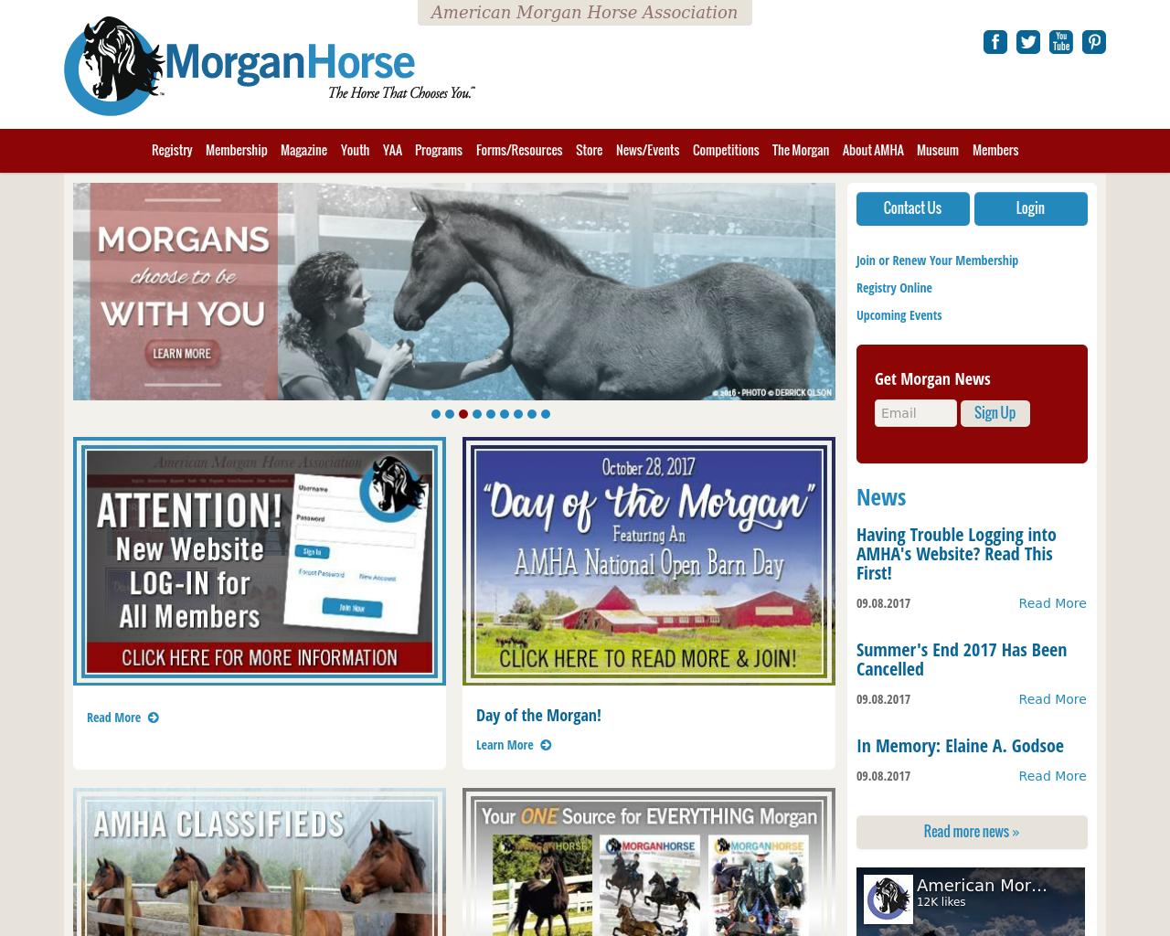 Morgan-Horse-Advertising-Reviews-Pricing