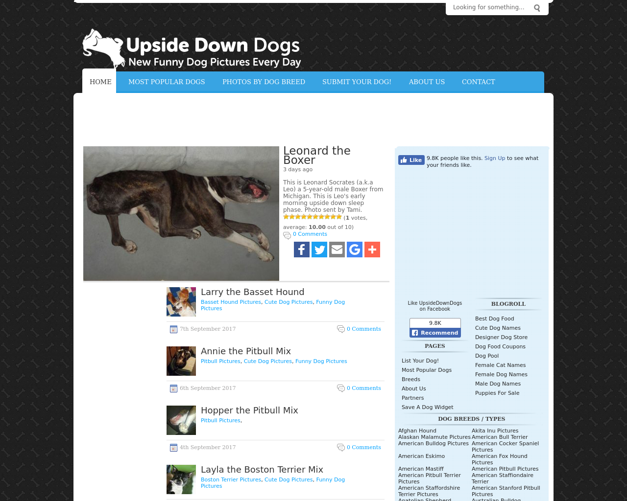 Upside-Down-Dogs-Advertising-Reviews-Pricing