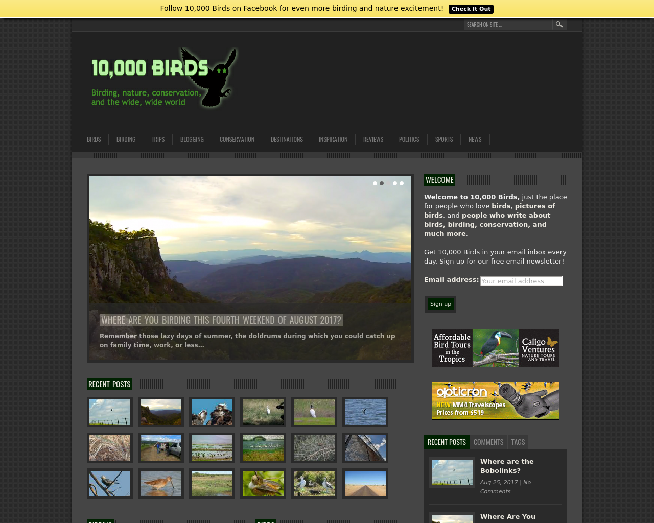 10,000-Birds-Advertising-Reviews-Pricing