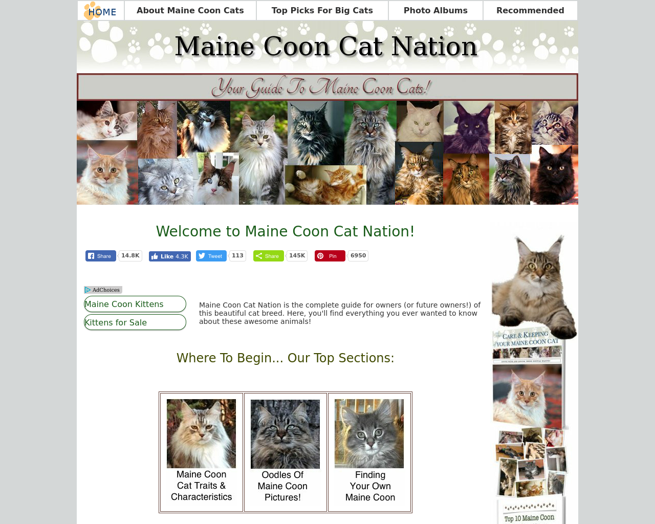 Maine-Coon-Cat-Nation-Advertising-Reviews-Pricing