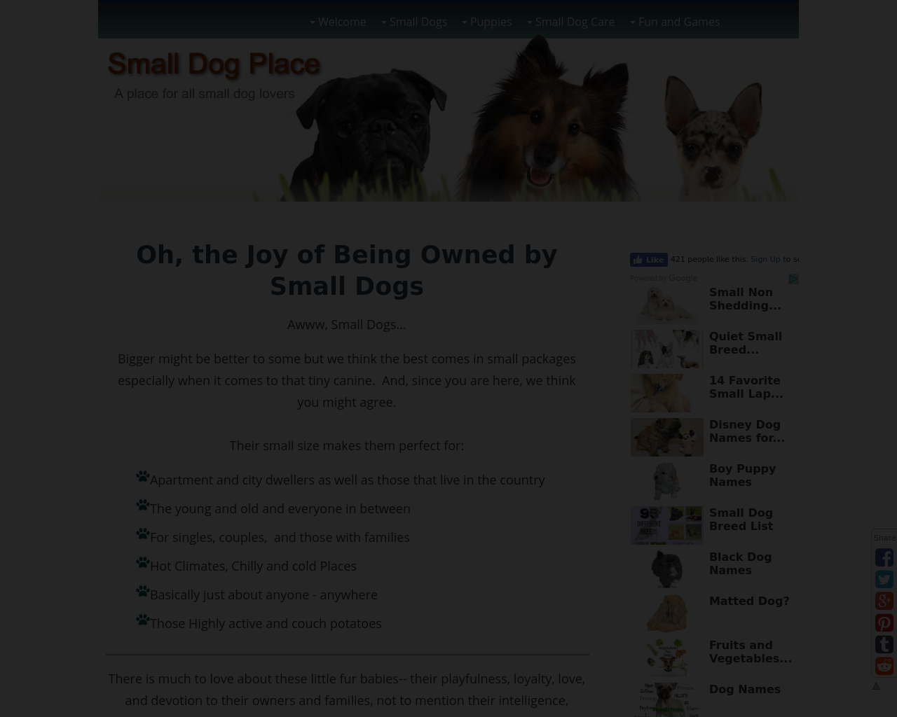 Small-Dog-Place-Advertising-Reviews-Pricing