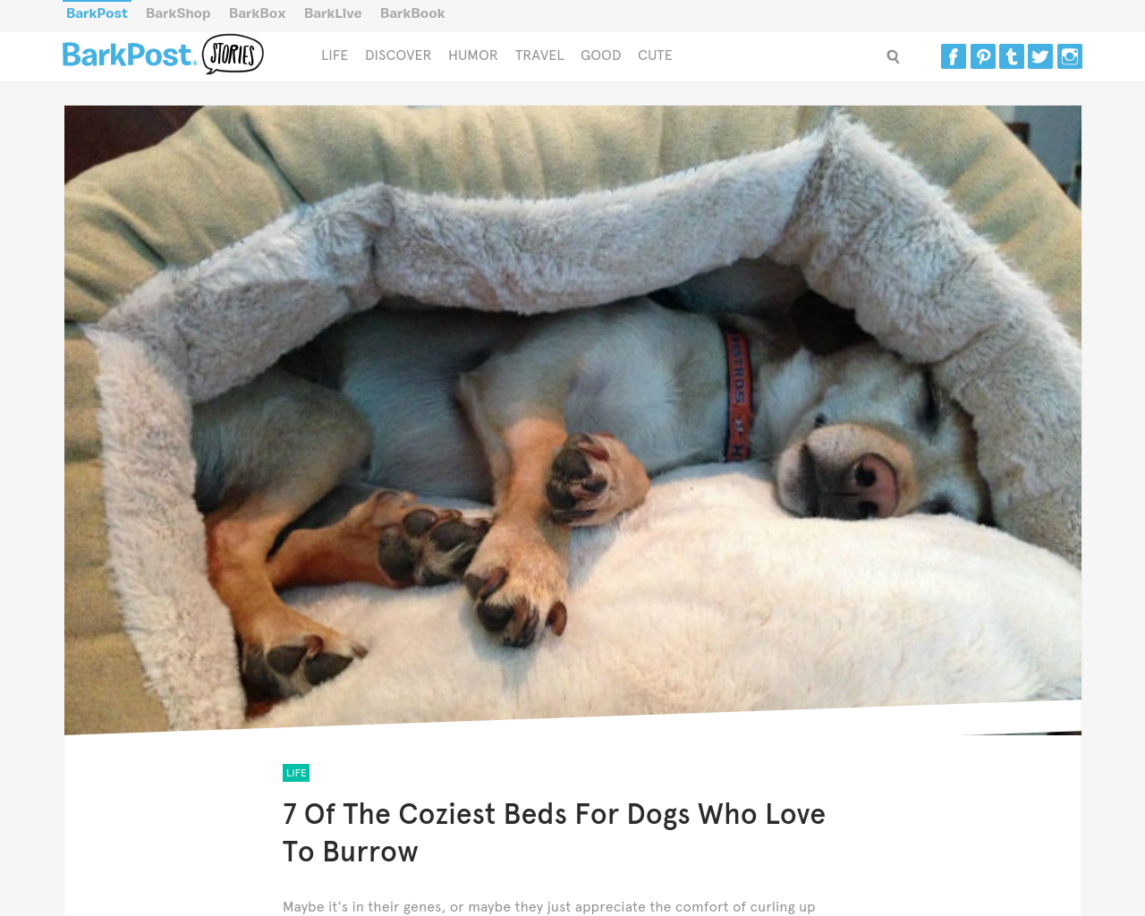 BarkPost-Advertising-Reviews-Pricing